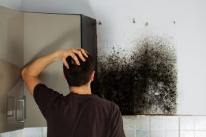mold removal salina, mold remediation salina, mold damage repair salina