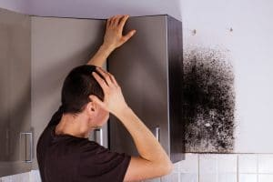 mold removal salina, mold remediation salina, mold prevention salina